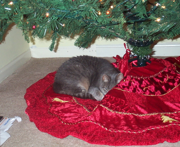 Gwen the cat under the tree